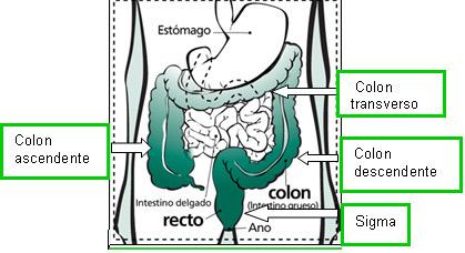 dolor intestinal en la próstata